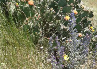 cactus-fleurie