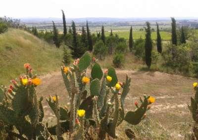 cactus-viala