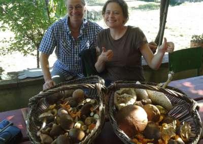 cueillette-champignon