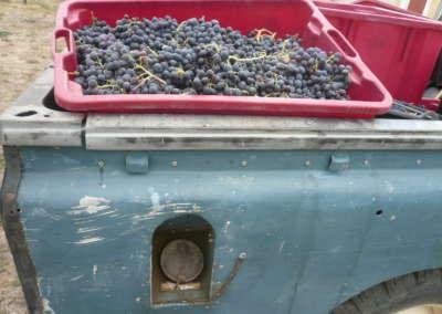 raisin-dans-camion