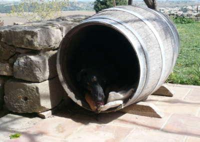 chien-tonneau
